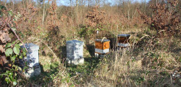 Gregomiel, apiculteur récoltant à Ozoir La Ferrière